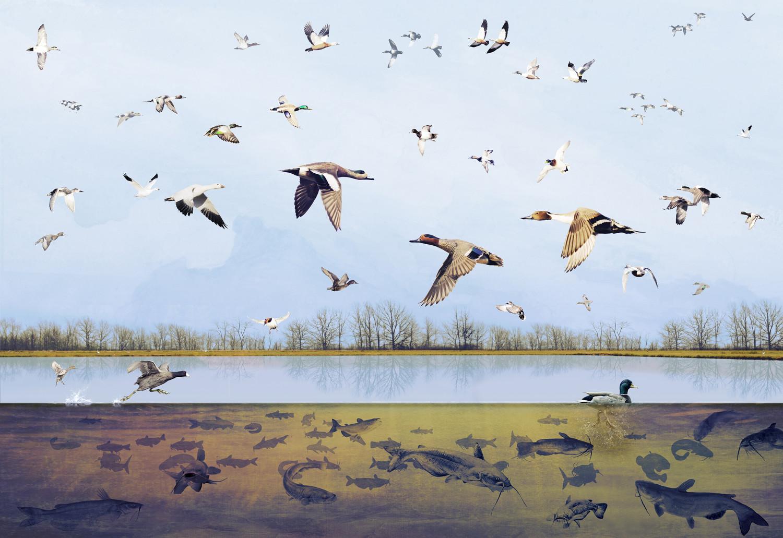 birds_catfish_cloar